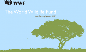 World Wildlife Fund Web Mocks